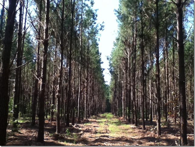 Timber Buyer < Tabor City Lumber Company